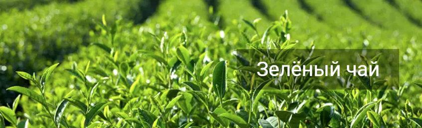 Зелёный чай ускоряет рост мышц и улучшает спортивные результаты